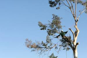 Tree Services in Raleigh NC | Tree Contractors | 919-50...
